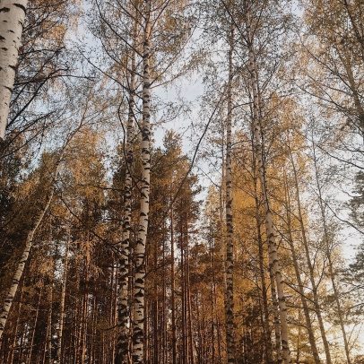 forests from Tyutchev's tales